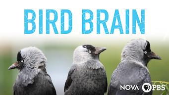 NOVA: Bird Brain (2017)