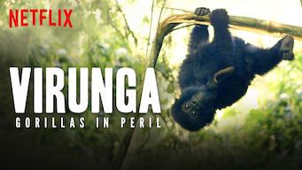 Virunga: Gorillas in Peril (2015)